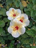 Konturen von Blumen auf einem weißen Hintergrund Lizenzfreie Stockbilder
