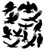 Konturer av örnar royaltyfri bild