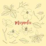 Konturer av blommor och bladet Magnoliauppsättning Blom- vektorillust Royaltyfria Foton