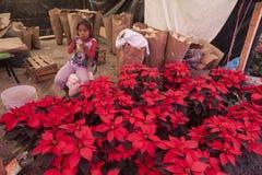 konturer av blommor på en vit bakgrund Royaltyfria Bilder