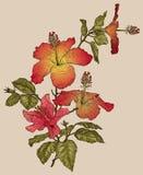 konturer av blommor på en vit bakgrund Arkivbild