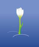 konturer av blommor på en vit bakgrund Arkivfoton