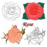 Konturer av blommor. rosor. Royaltyfria Bilder