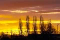 Konturer av den kala gränden för poppelträd mot färgrik himmel för solnedgång i vintern royaltyfri fotografi