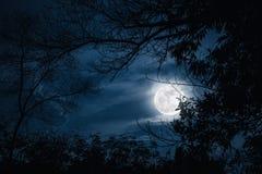 Konturer av det torra trädet mot himmel och den härliga toppna månen Ou arkivfoto