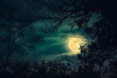 Konturer av det torra trädet mot himmel och den härliga toppna månen Ou Arkivfoton
