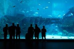 Konturer av folk mot ett stort akvarium Turist- seende fi Arkivbild