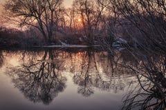Konturer av mörka träd reflekteras i vattnet/fjädrar tidigt eller den tidiga hösten, de första frosterna Royaltyfri Foto