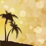 Konturer av palmträd mot bakgrunden av sol- patche Arkivbilder