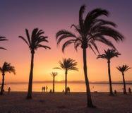 Konturer av palmträd mot färgrik himmel på solnedgången Royaltyfri Foto