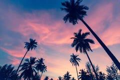 Konturer av palmträd mot himlen på skymning Natur royaltyfria bilder