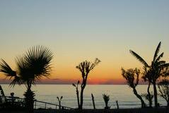 Konturer av palmträd mot solnedgången royaltyfria bilder