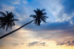 Konturer av palmträd på en bakgrund för blå himmel Natur royaltyfria bilder
