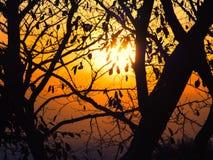 Konturer av sidor och stammen på solnedgången glöder Royaltyfria Foton
