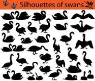 Konturer av svanar Royaltyfri Fotografi