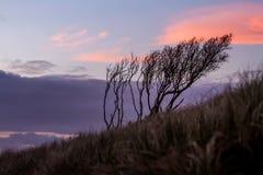 Konturer av threes på solnedgånghimmelbakgrund, abstrakt naturligt Royaltyfri Foto