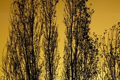 Konturer av träd Royaltyfri Fotografi
