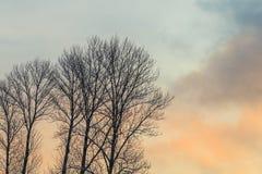 Konturer av träd mot bakgrunden av gryning royaltyfri fotografi