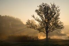 Konturer av träd på en dimmig dimmig morgon med solstrålcomi royaltyfri bild