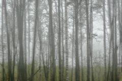 Konturer av träd på en molnig dag Suddig fokus arkivbilder
