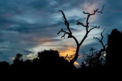 Konturer av trädet med solnedgångbakgrund arkivfoto
