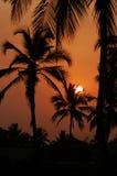 Konturerna av palmträd på gryning Arkivfoto