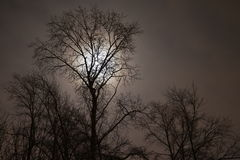 Konturerna av träd Royaltyfri Foto