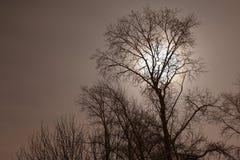 Konturerna av träd Arkivbild