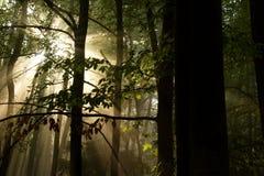 konturerna av träden Royaltyfri Fotografi