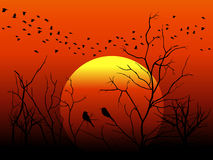 Konturfågeln och trädfilialen på orange solvektor planlägger Arkivbilder