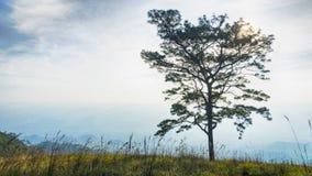 Konturfilialträd med inga sidor mot molnig himmel och G Royaltyfria Bilder