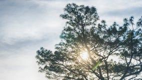 Konturfilialträd med inga sidor mot molnig himmel och G Royaltyfri Fotografi
