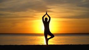 Konturflickan som gör trädyoga, poserar på solnedgången i natur utomhus Sportig yogakvinna med öppen lyftt armövning stock video