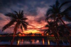 Konturkokosnötpalmträd nära floden på solnedgången Tappning Royaltyfria Foton
