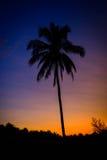 Konturkokosnötpalmträd på skymningtid Royaltyfria Bilder