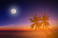 Konturkokosnötpalmträd på stranden med månen Royaltyfri Foto