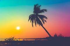 Konturkokosnötpalmträd på stranden på solnedgången Royaltyfri Fotografi