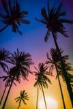 Konturkokosnötpalmträd på stranden på solnedgången Fotografering för Bildbyråer