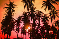 Konturkokosnötpalmträd på stranden på solnedgången Arkivfoto