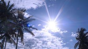 Konturkokospalm mot med blå himmel och vitmolnet med solstrålljus Royaltyfria Foton