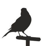 Konturn av en fågel på en sittpinne också vektor för coreldrawillustration Royaltyfri Foto