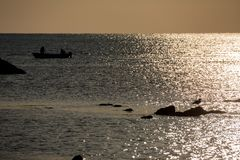 Konturn av fågelsammanträde på havet vaggar royaltyfri foto