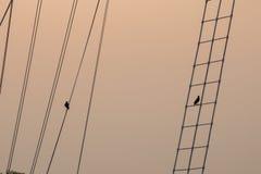 Konturn av fåglar rymmer ett rep och en stege royaltyfri foto