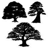 Konturn av olika träd royaltyfri fotografi