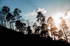 Konturn av skogen och träd i solnedgången med diagramen av folkvänner går på solnedgången royaltyfri foto