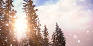 Konturn sörjer träd mot himmel 3d Arkivfoton