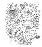 konturowy rysunek kolorystyka Maczki Bukiet maczki Zdjęcie Royalty Free