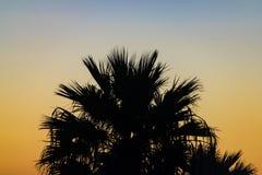 Konturpalmträd på solnedgången, Agadir, Marocko royaltyfria foton