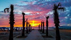 Konturpalmträd på stranden på solnedgången royaltyfri fotografi
