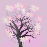 Kontursakura träd på rosa bakgrund royaltyfri illustrationer